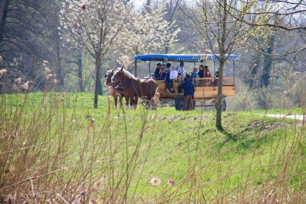 Mit dem Pferdewagen zum Königsschloss
