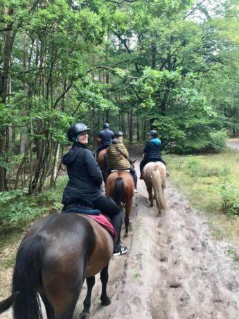 Auf dem Pferderücken durch den Darsser Urwald