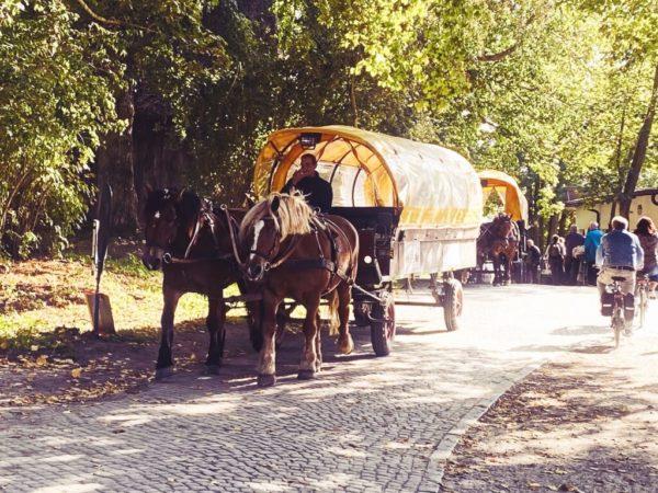 Unterwegs mit dem Pferdewagen auf Hiddensee