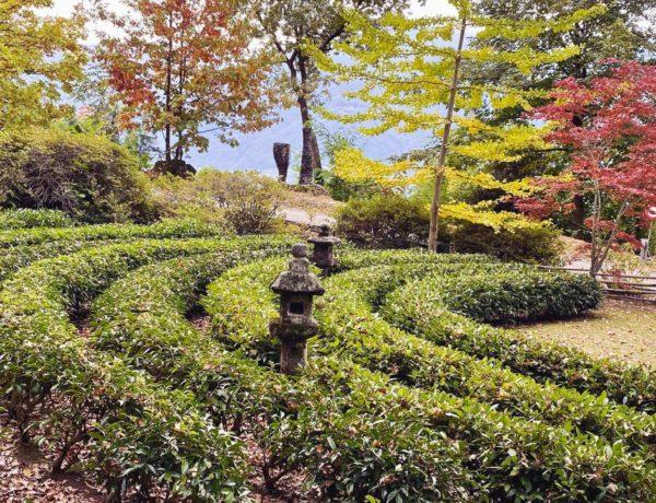 Teeplantage auf dem Monte Verità