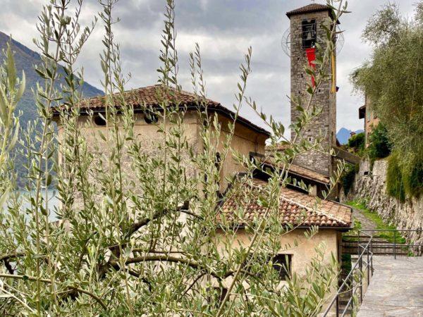 Kirchen und Olivenbaum in Gandria