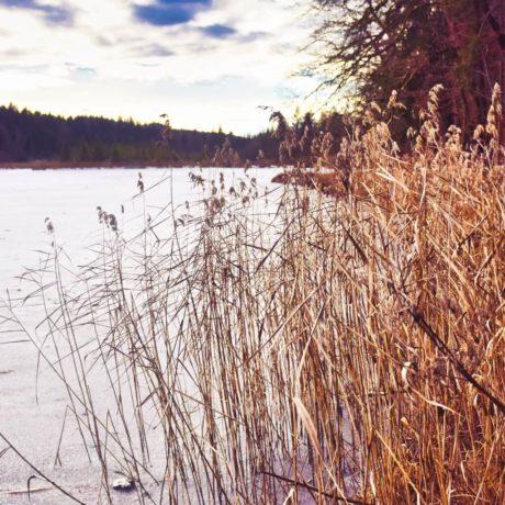 Deininger Weiher im Winter
