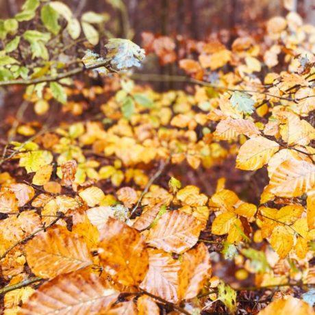 Maisinger Schlucht im Herbst