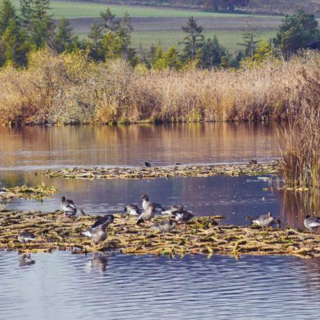 Vogelparadies Maisinger See