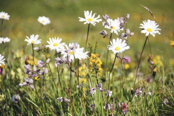 Sommerwiese im Hintersteiner Tal