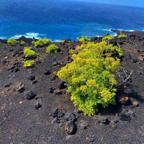 Ruta de los Volcanes los Volcanes - gelber Meeressalat