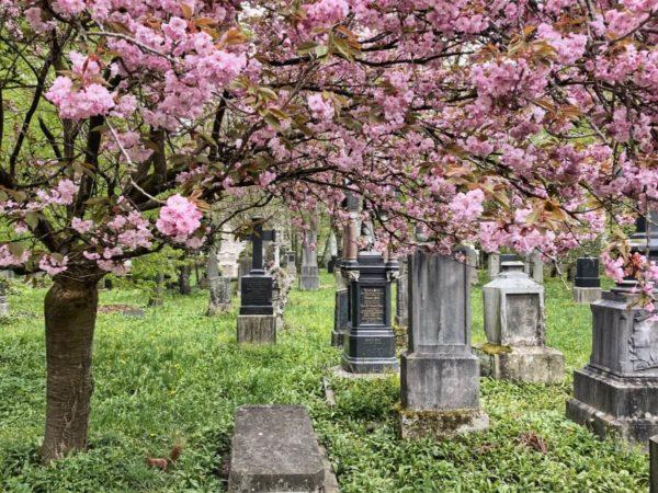 Frühling auf dem Alten Südlichen Friedhof