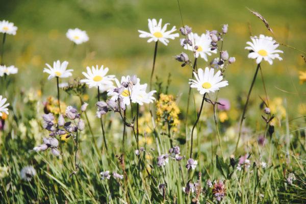 Naturparadies Blumenwiese