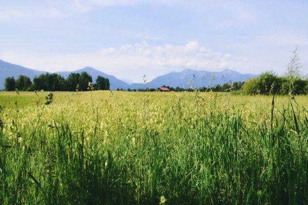Wanderung mit Bergblick rund um Kloster Benediktbeuern