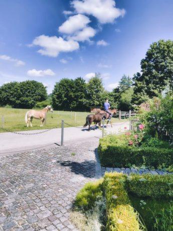 Blauer Reiter in Sindelsdorf