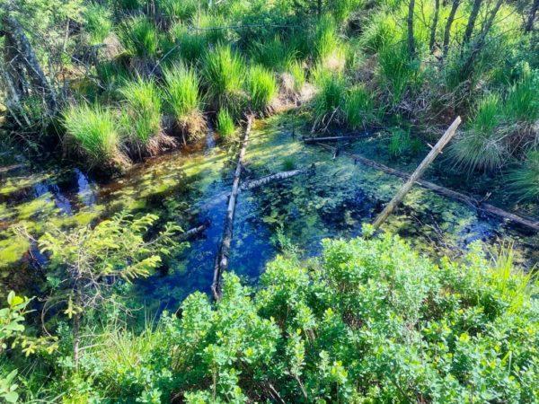 Moorlandschaft auf der Wanderung im Murnauer Moos