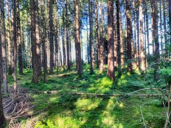 Zauberwald auf der Wanderung im Murnauer Moos