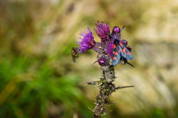 Schmetterlinge auf der Wanderung über die Esterbergalm auf den Wank