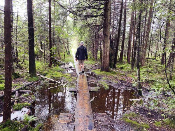 Moorwanderung im Voralpenland: Auf dem Brettleweg durchs Wiesfilz