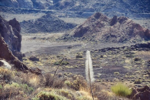 Wanderparadies Teneriffa: Im Teide-Nationalpark
