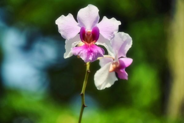 Citytrip Singapur: Orchideen im Botanischen Garten