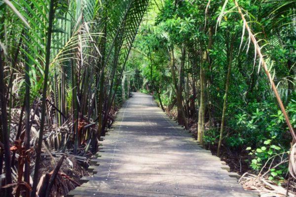 Citytrip Singapur: Pulau Ubin – Mangrovenweg