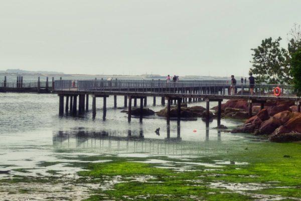 Citytrip Singapur: Pulau Ubin – Wanderweg auf Stelzen