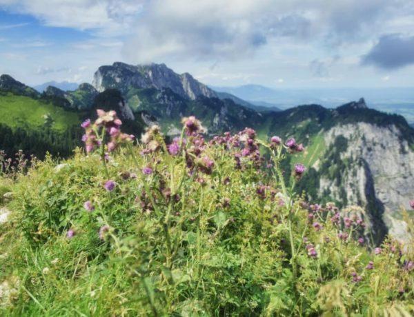 Höhenweg am Brauneck: Blick auf die Benediktenwand